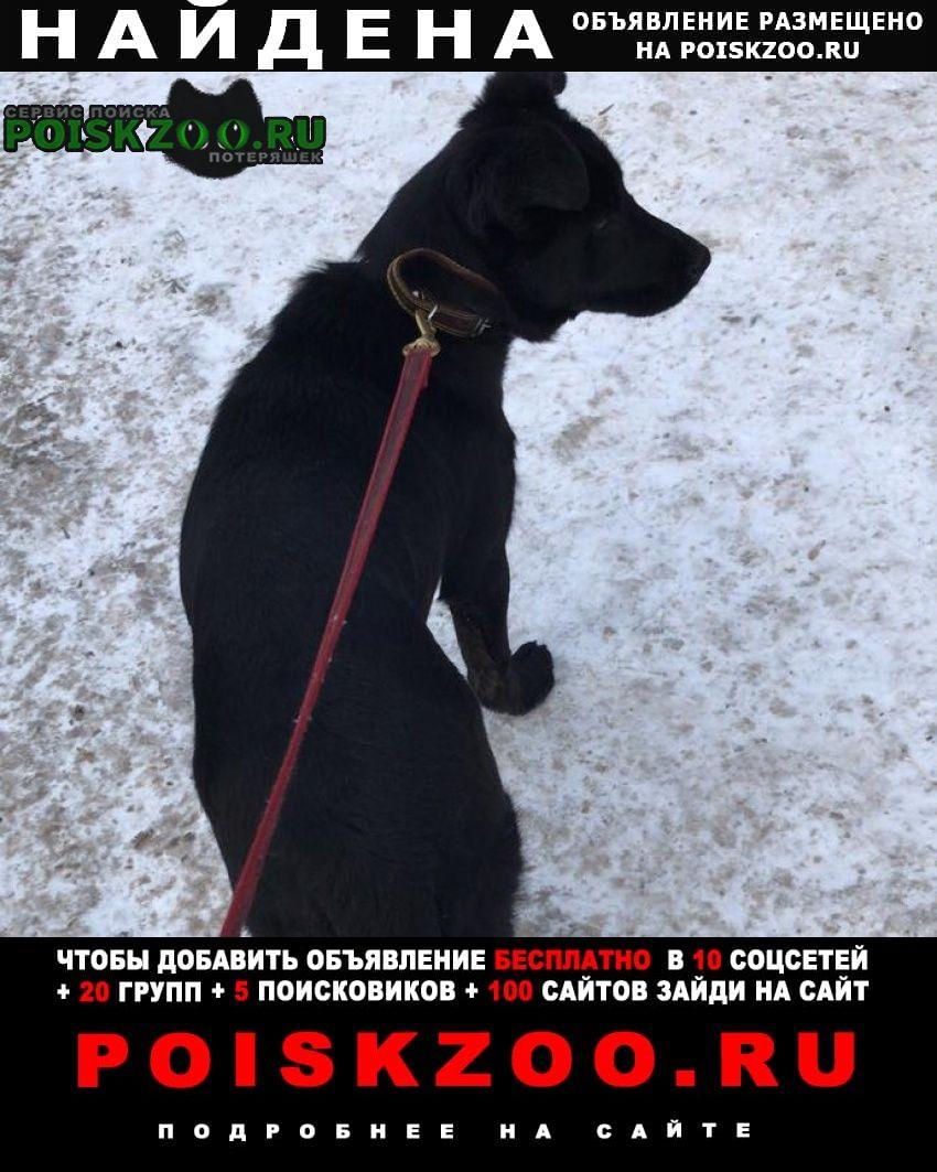Найдена собака щенок, чёрный кобель Москва