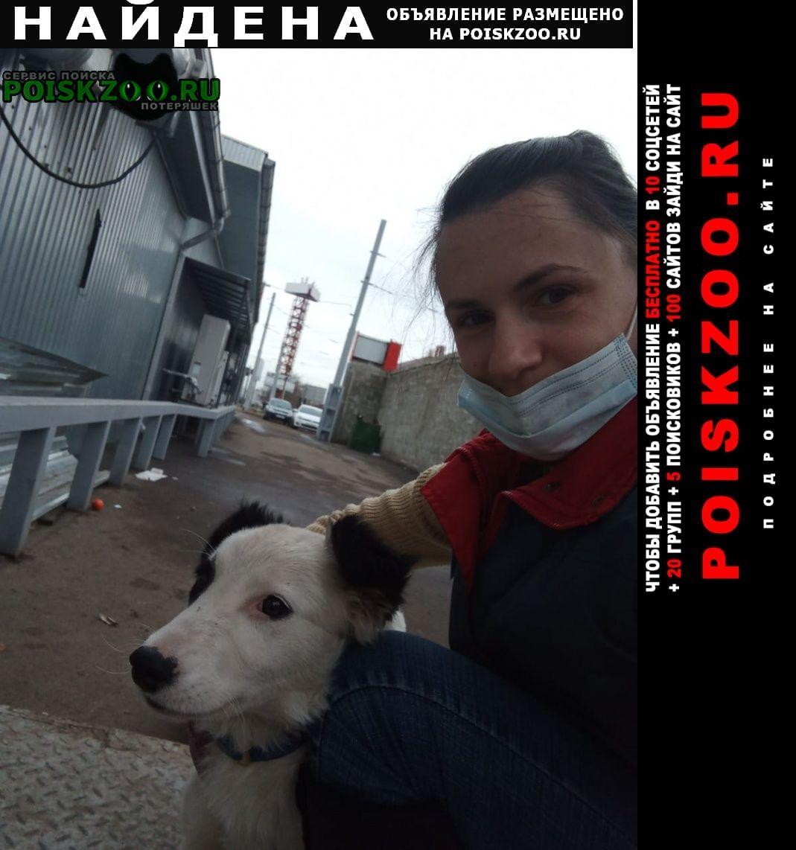 Найдена собака хорошоя, молодая собачка ищет дом. Краснодар