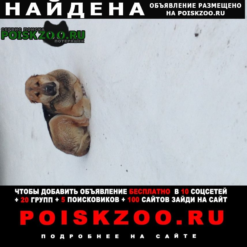 Найдена собака руэм Йошкар-Ола
