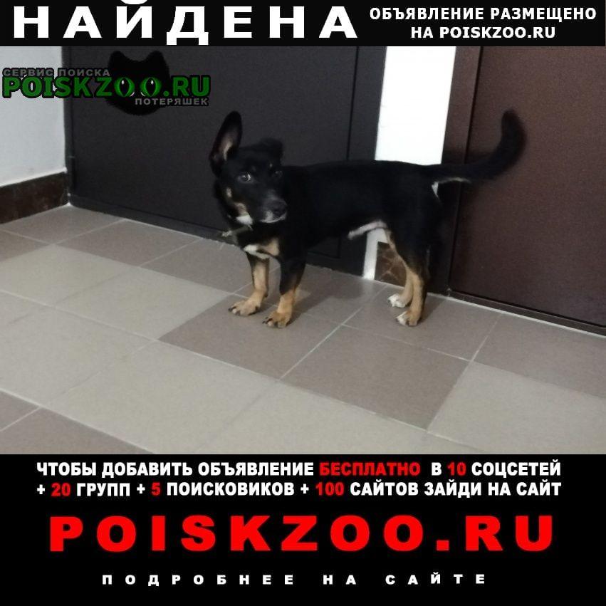 Найдена собака чей пёсик? Кемерово