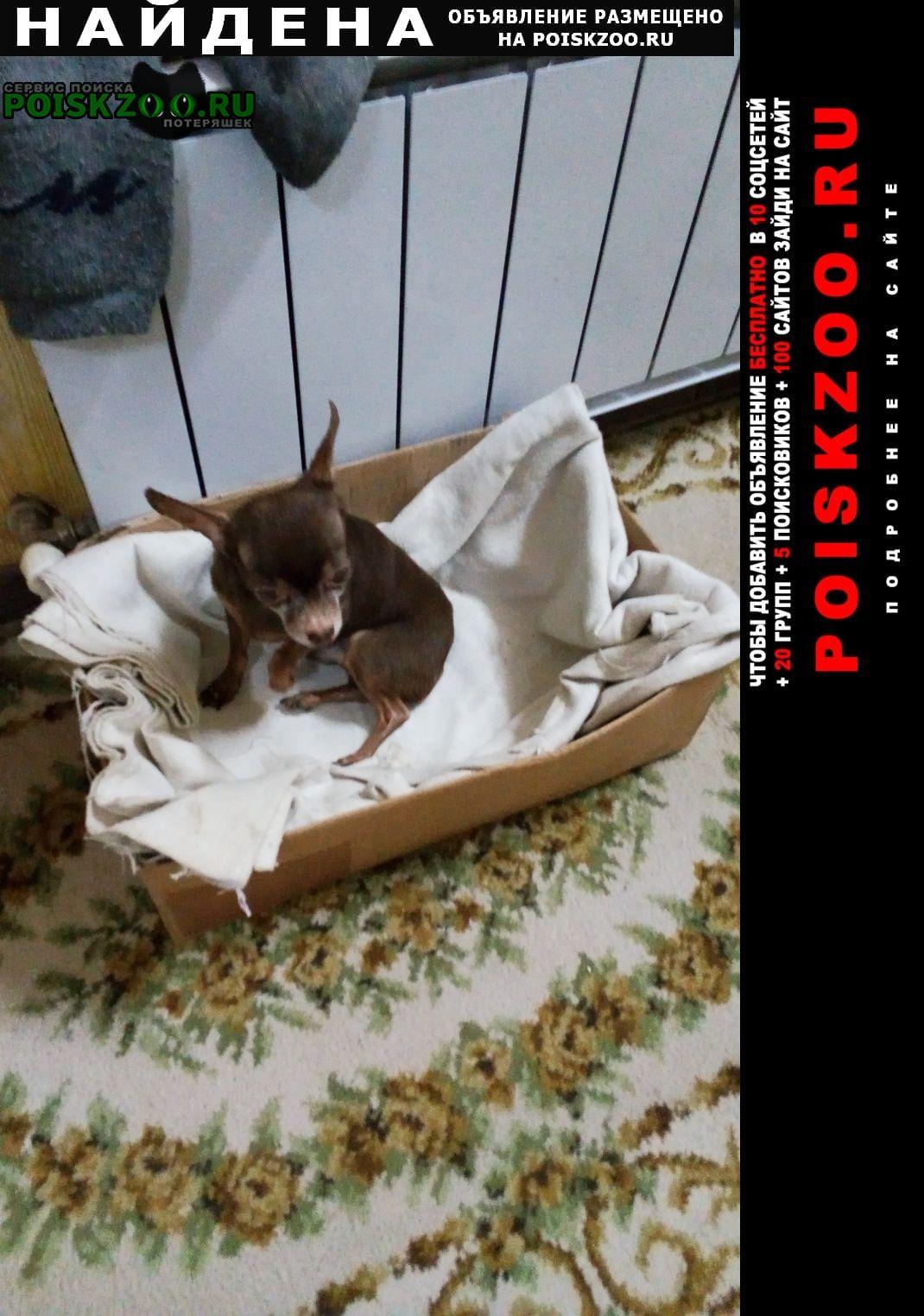Найдена собака тойчик Краснодар
