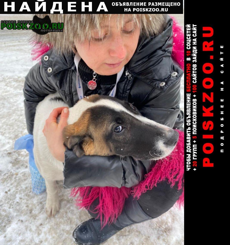 Найдена собака ищем владельца Москва