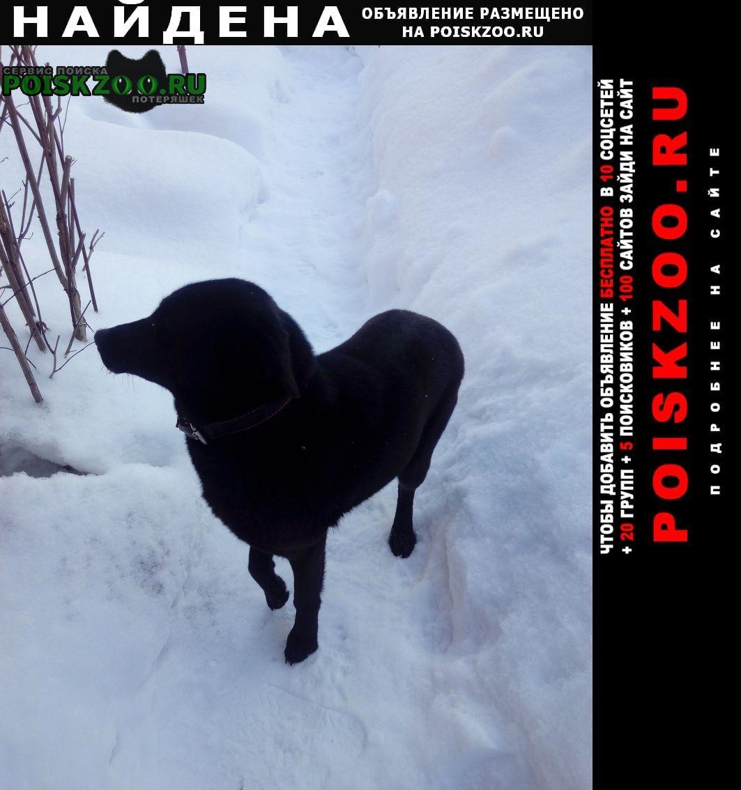 Найдена собака Руза