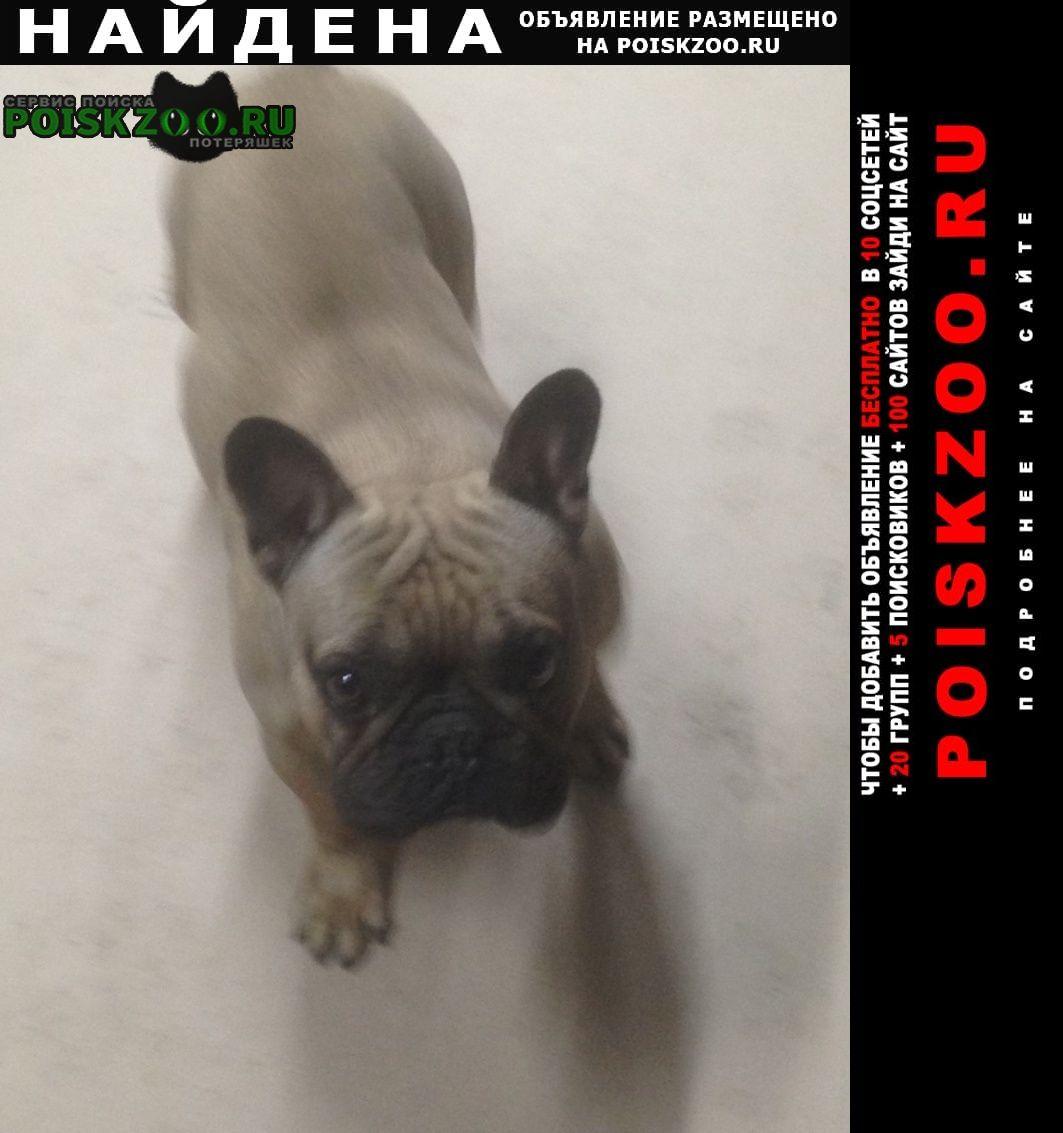 Найдена собака французский бульдог Симферополь