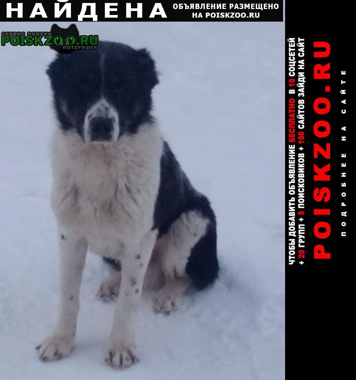 Найдена собака Венев