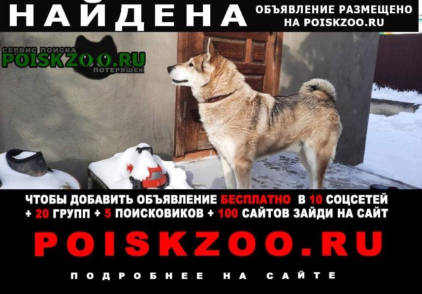 Найдена собака в туле в районе ул.бажено Тула