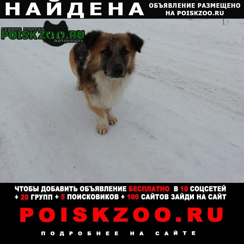 Найдена собака замечена на калужском шоссе у д.бабенки Вороново