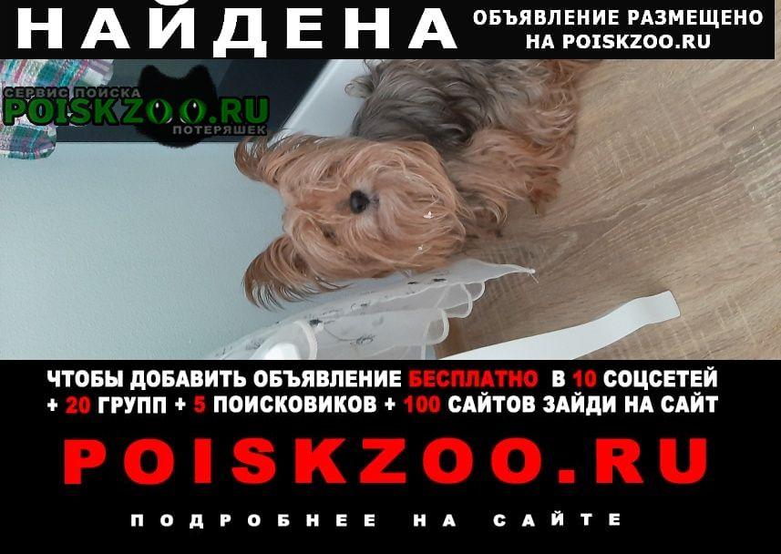 Найдена собака йоркширский терьер Москва