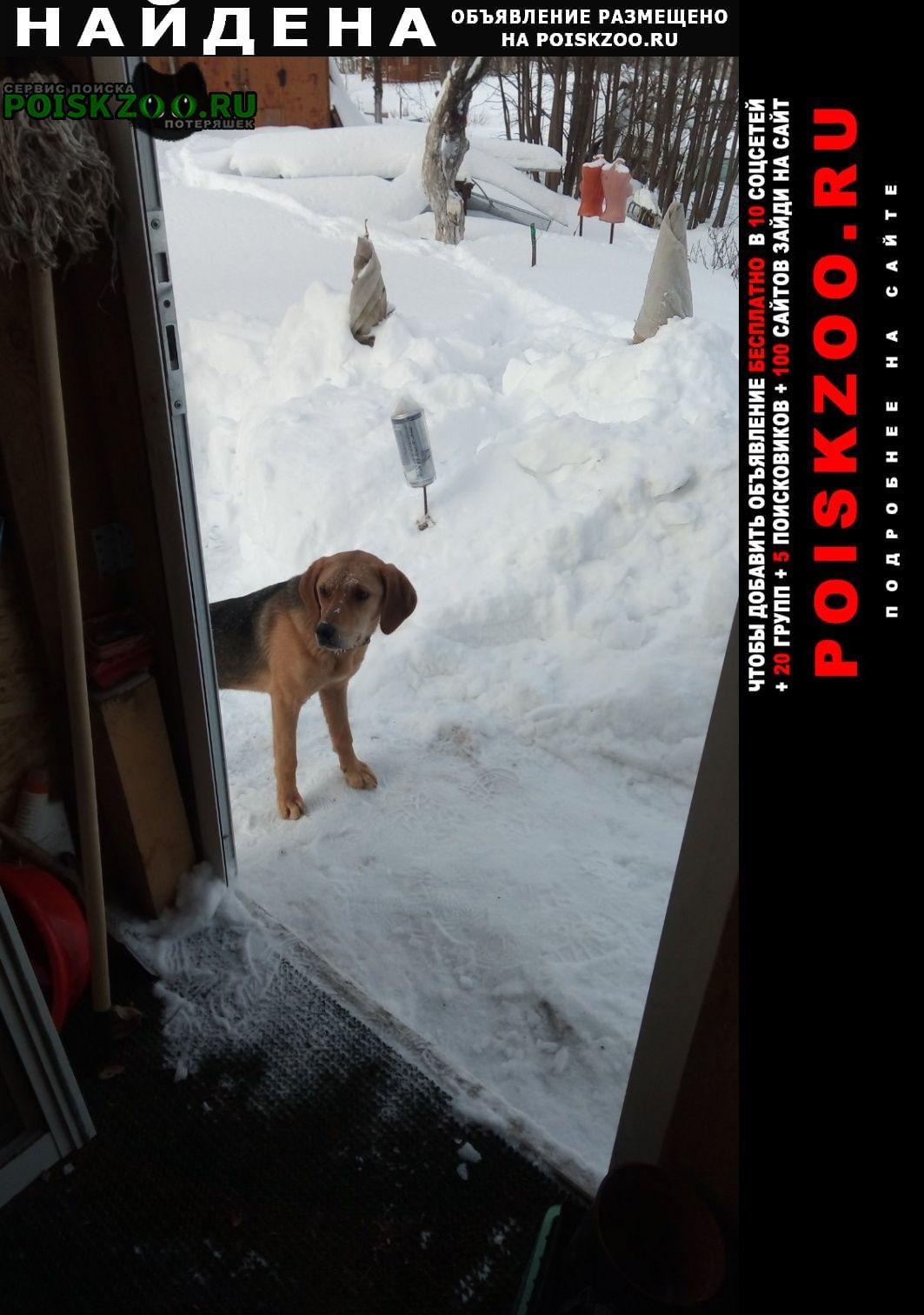 Найдена собака девочка, молодая Владимир