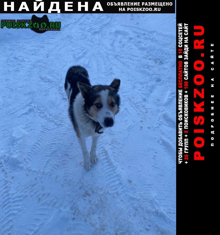Найдена собака мерзнет на улице уже неделю Химки