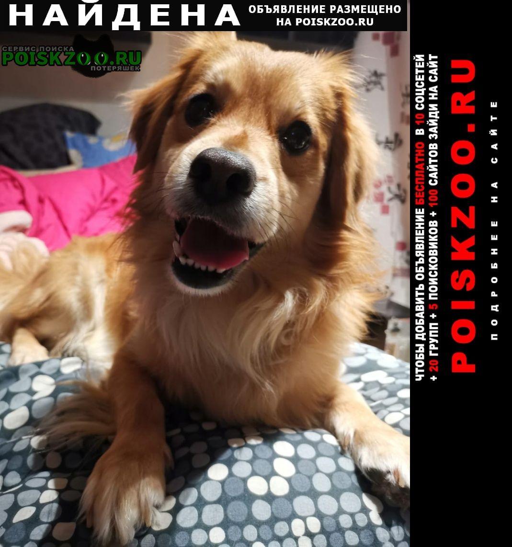 Найдена собака в районе южное бутово Москва