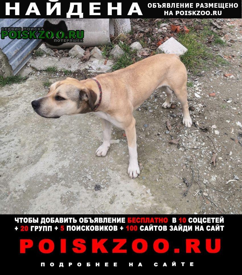 Найдена собака бегает в районе царского села Новороссийск