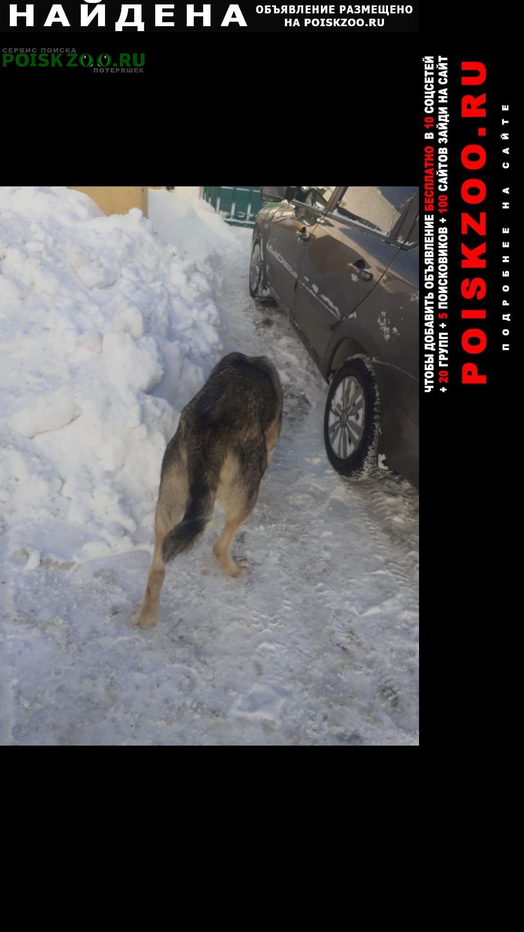 Найдена собака метис алабая Москва