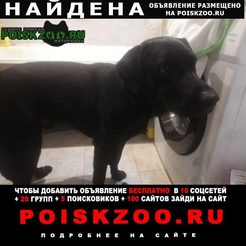 Найдена собака Гомель