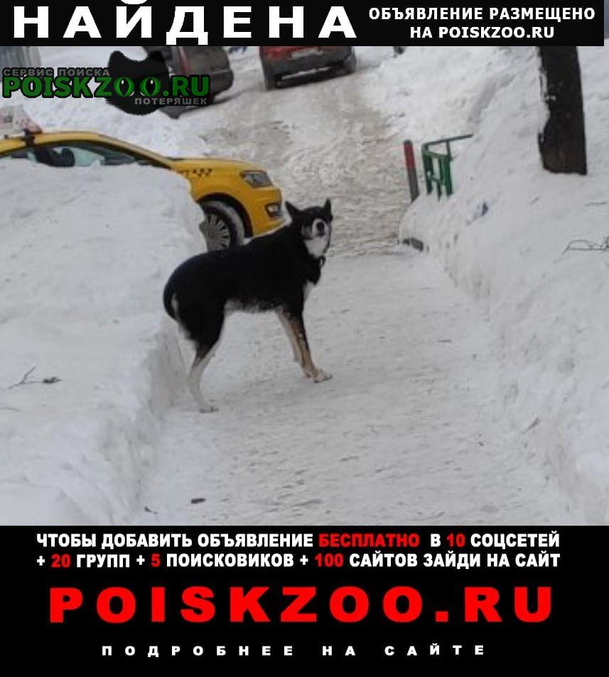 Найдена собака. чертаново центральное Москва