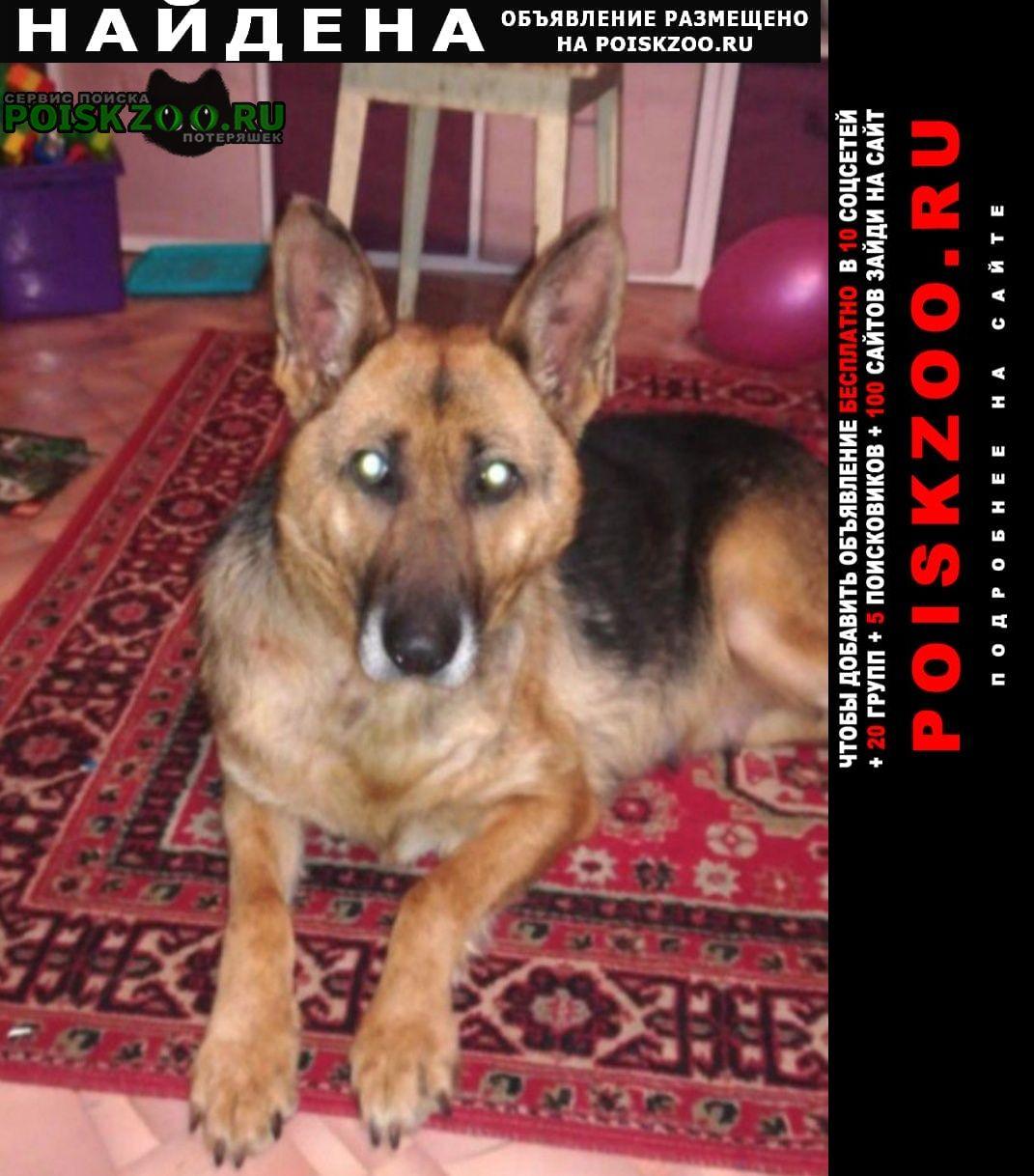 Найдена собака симферопольское шоссе овчарка сука Москва