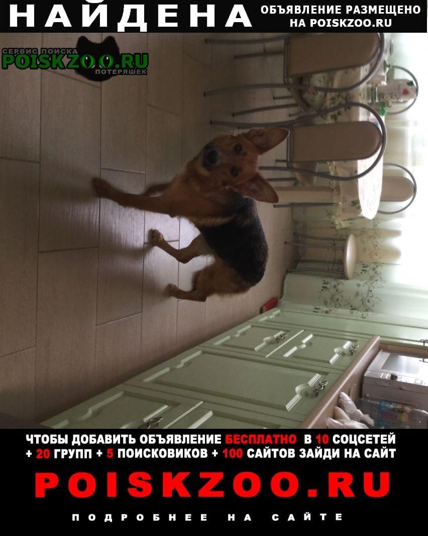 Найдена собака после родов без щенков Заокский