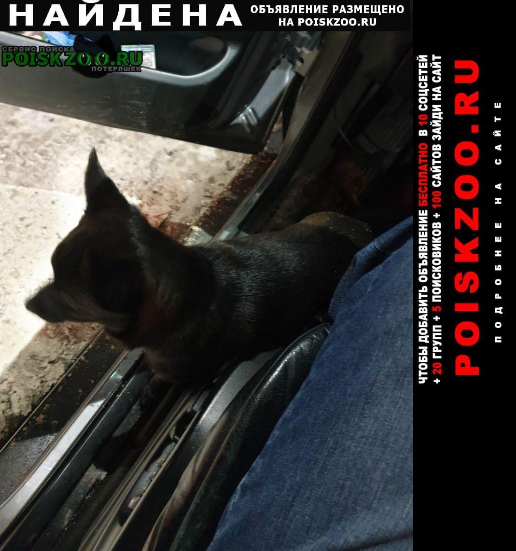 Найдена собака на заправке лукойл Москва