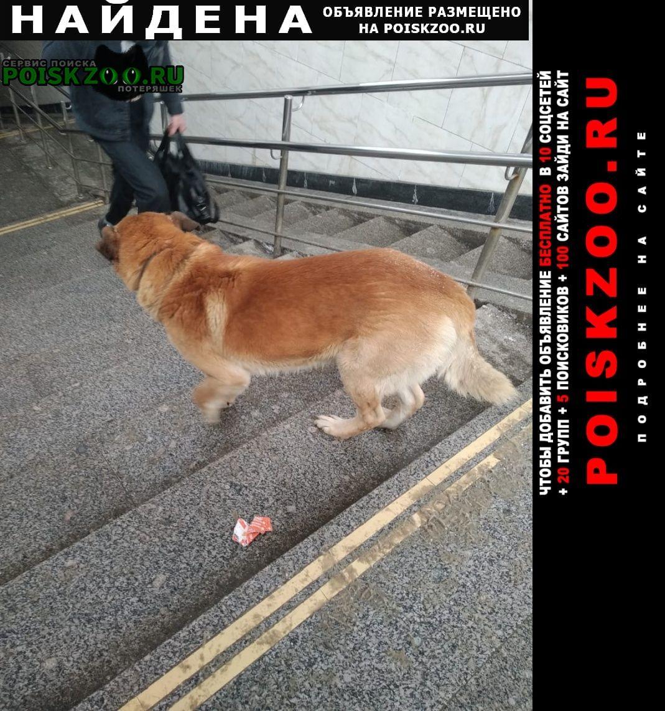 Найдена собака м. новогиреево Москва