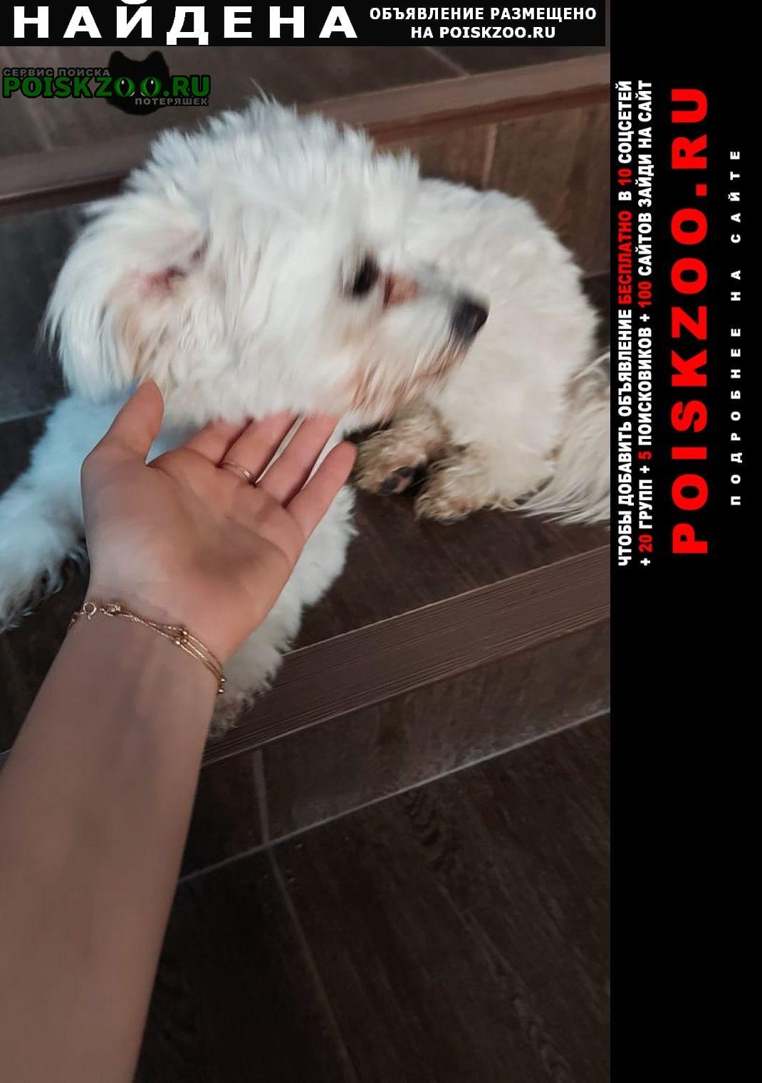 Найдена собака Славянск-на-Кубани