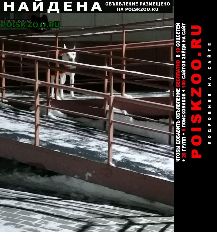 Найдена собака чья собачка? Томск