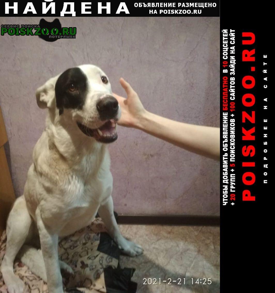 Найдена собака молодой кобель, ухоженный Верхняя Пышма