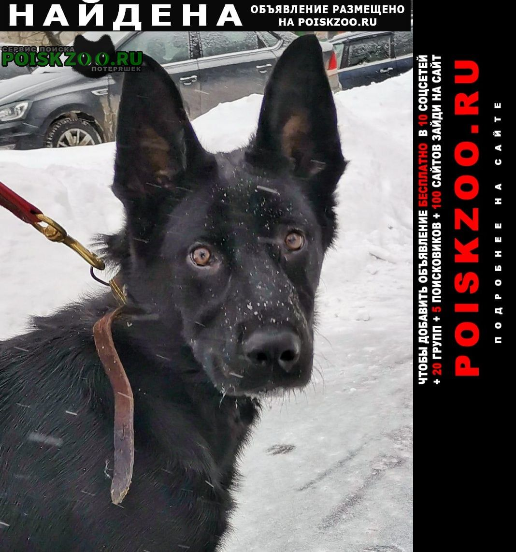 Найдена собака щенок ищет дом, метис овчарки Москва