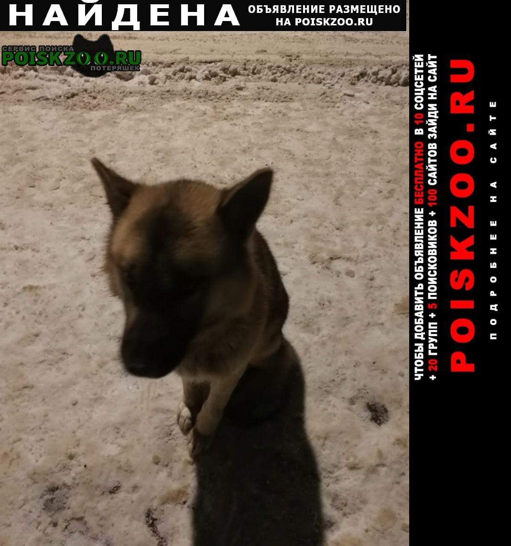 Найдена собака, в районе цмис Солнечногорск