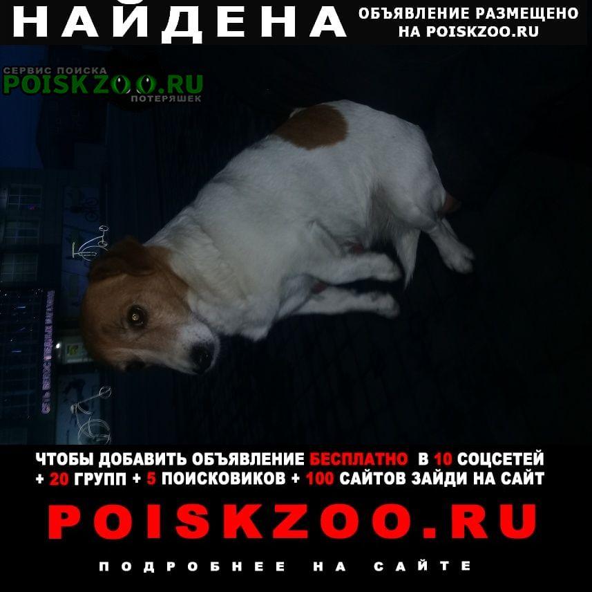 Найдена собака ул.ковтюха 123 Славянск-на-Кубани