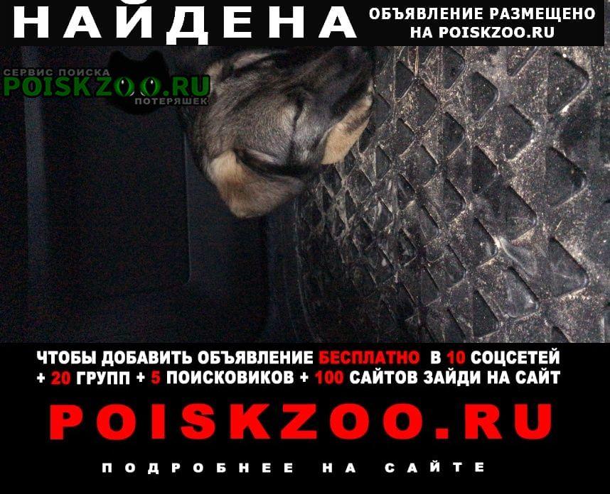 Москва Найдена собака