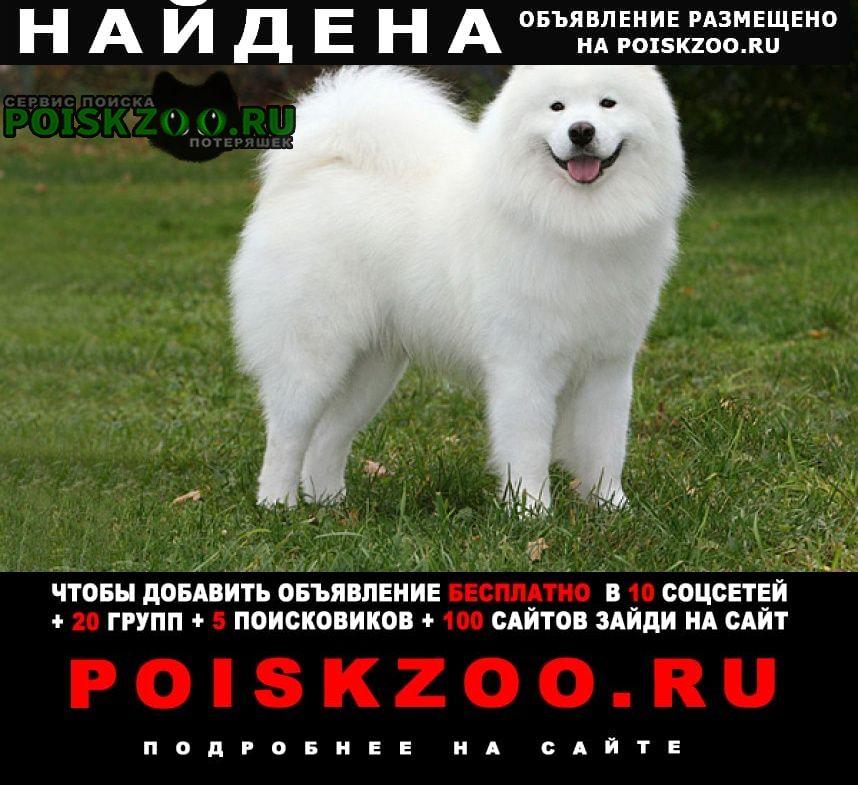Найдена собака белая лайка самоед проспект мира Москва