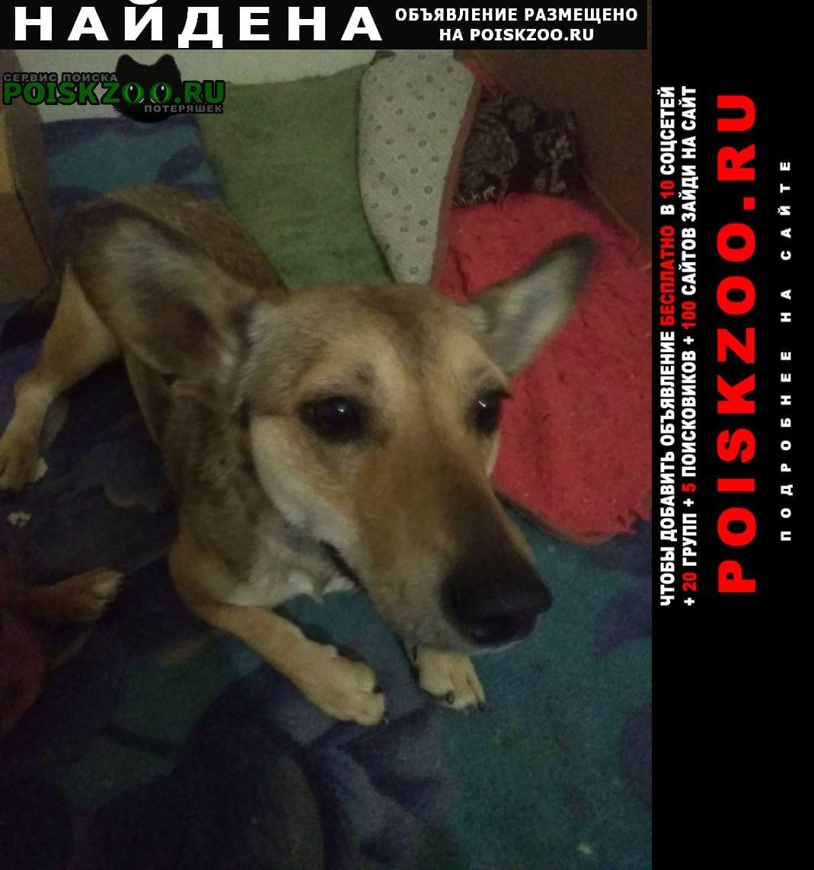 Найдена собака маленькая рыжая дворняжка Воронеж