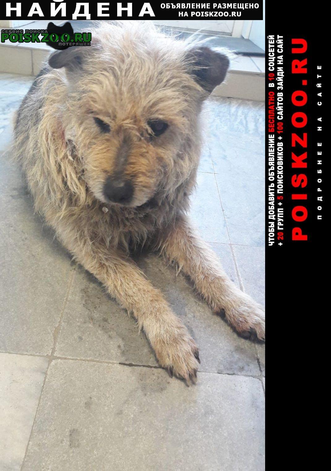 Найдена собака срочно нужна помощь Омск