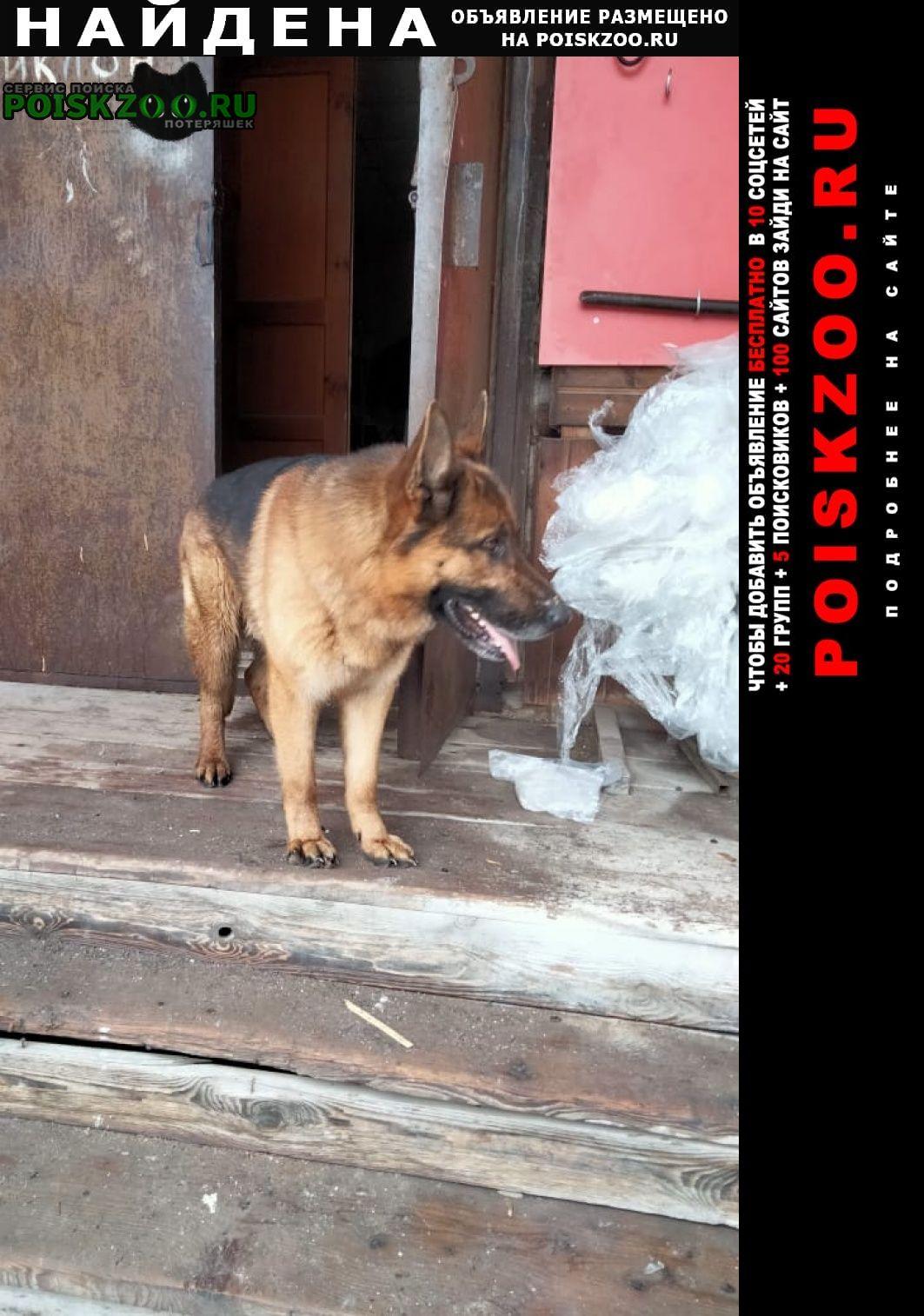 Найдена собака кобель, немецкая овчарка, без ошейника. Тула