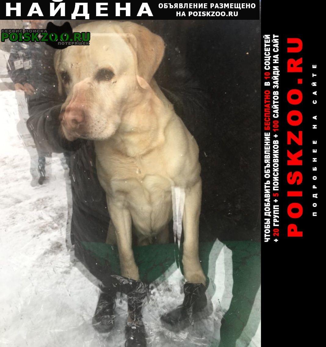 Найдена собака Троицк