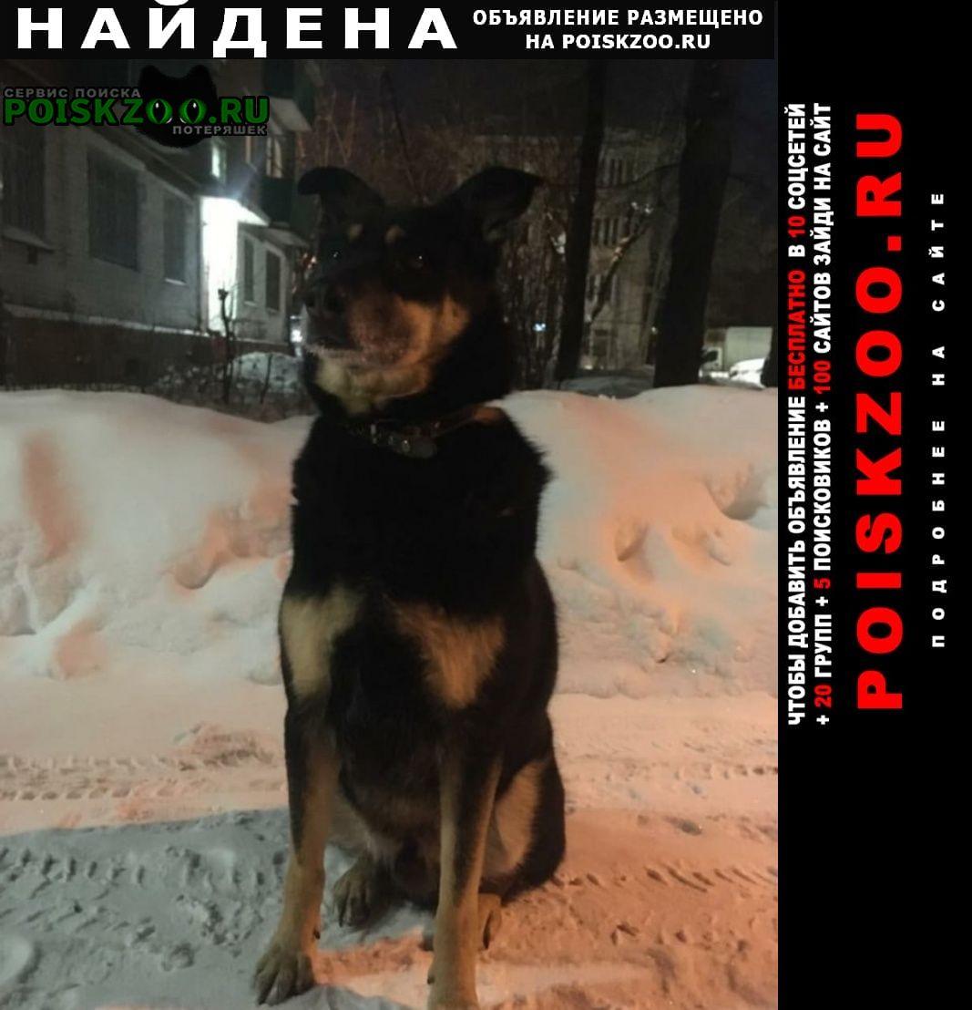 Найдена собака кобель Химки
