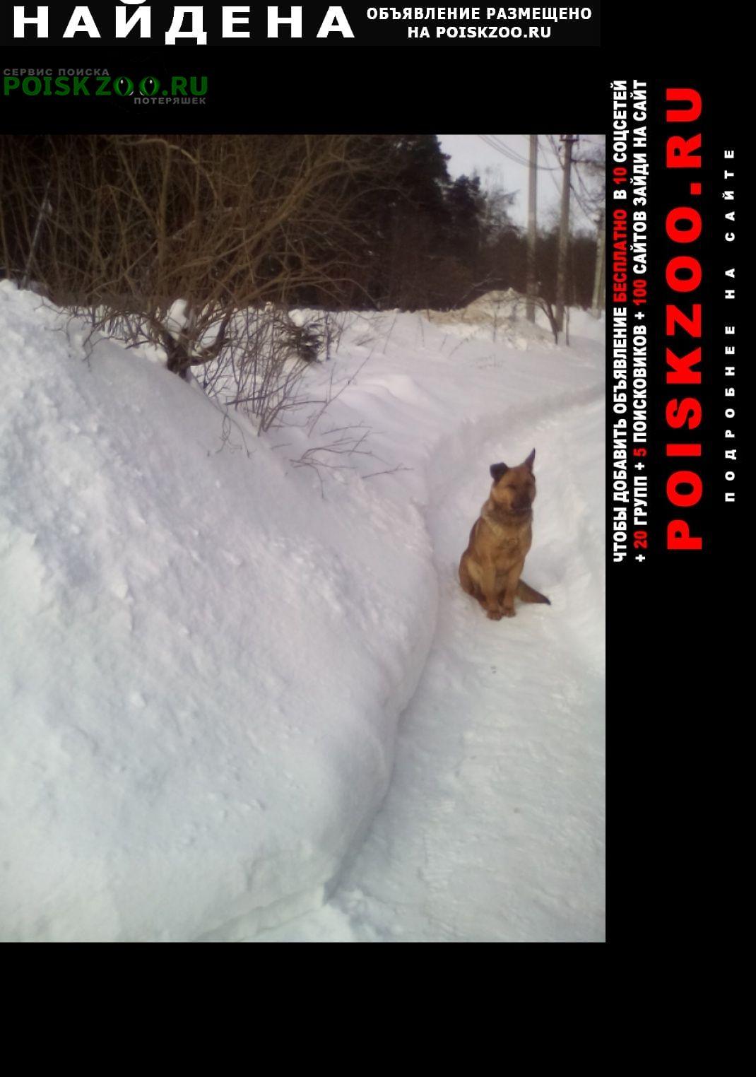Найдена собака Малаховка