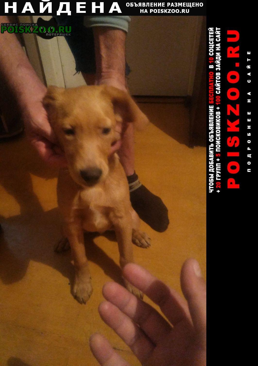 Найдена собака кобель тел для связи. Балаково