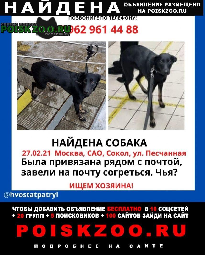 Найдена собака (аэропорт) Москва