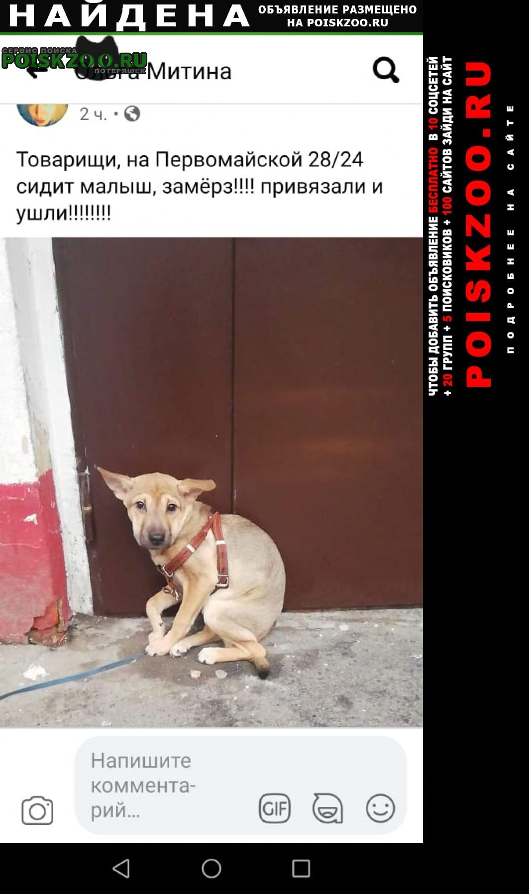 Найдена собака девочка Москва