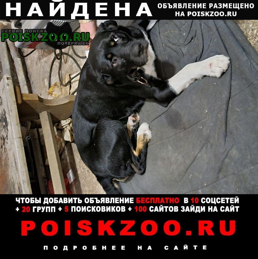 Найдена собака кобель ищем хозяина пос. солнечное Сестрорецк