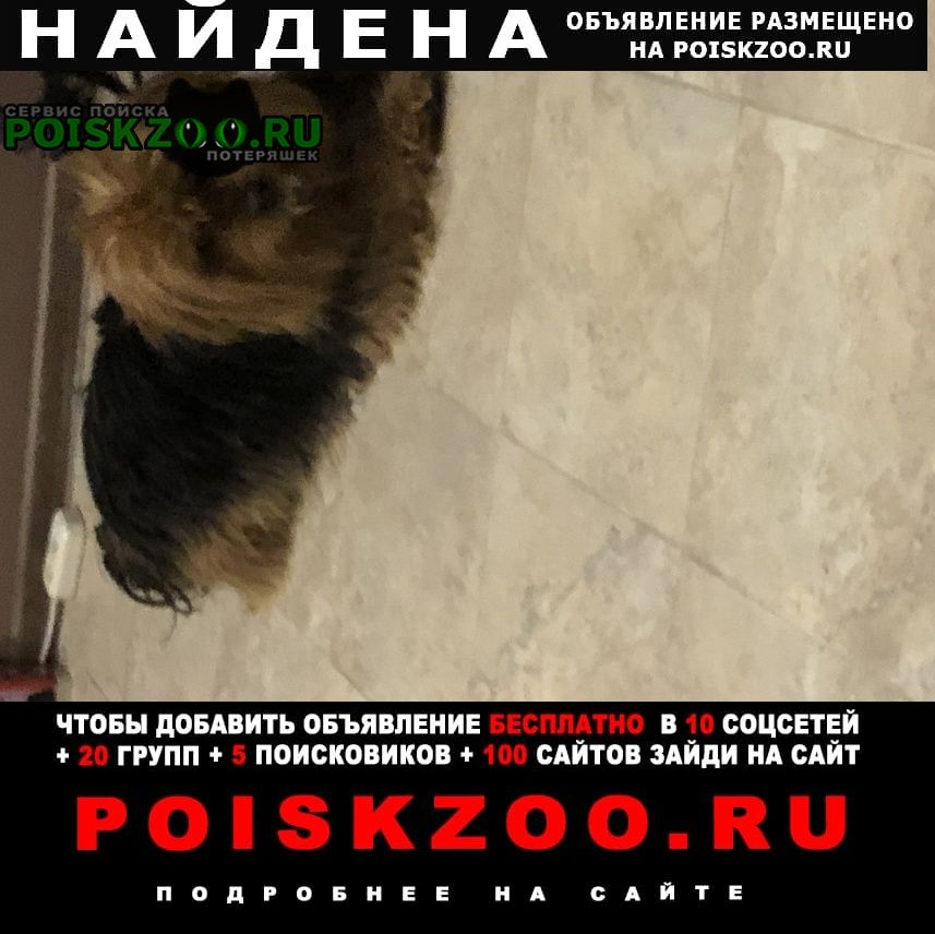 Найдена собака кобель ищем хозяина Оренбург