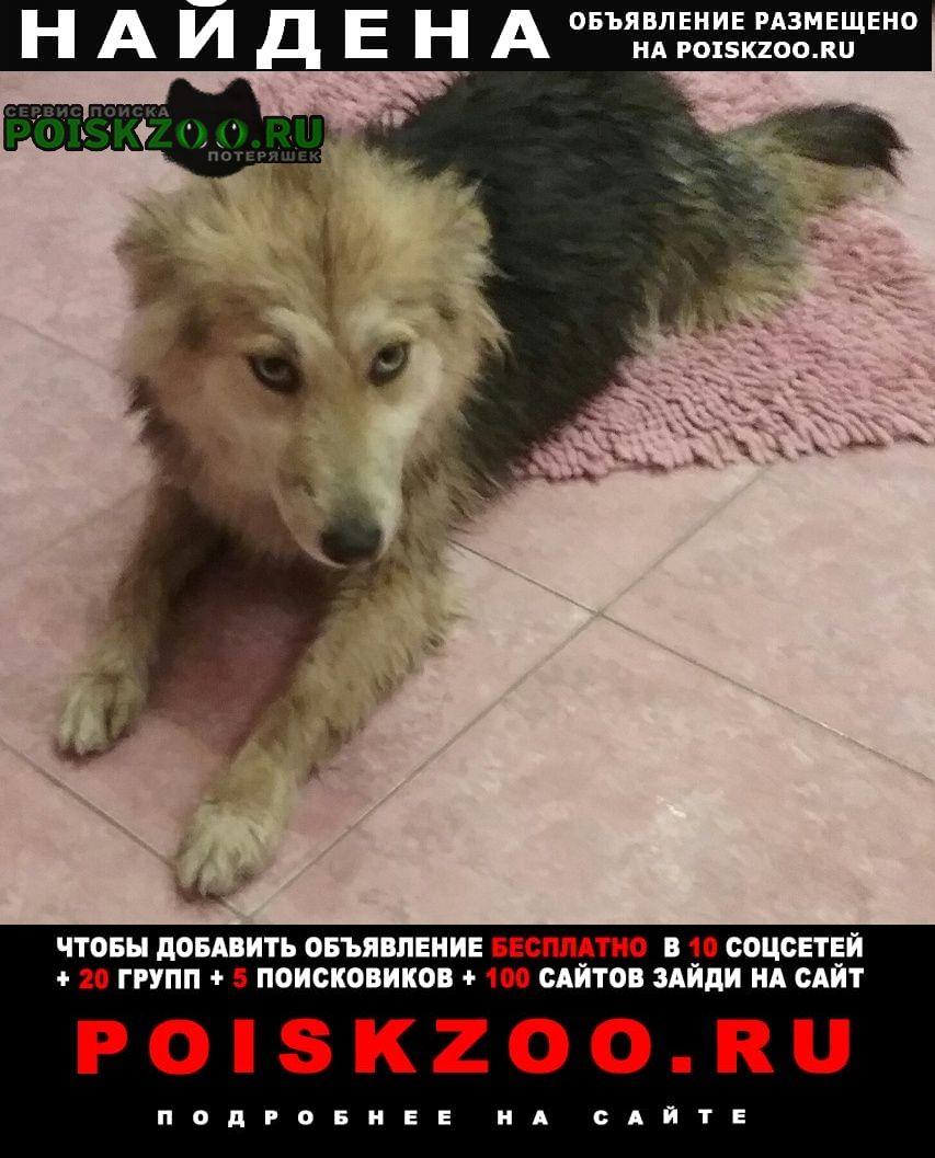 Найдена собака в ошейнике, голубые глаза Ростов-на-Дону