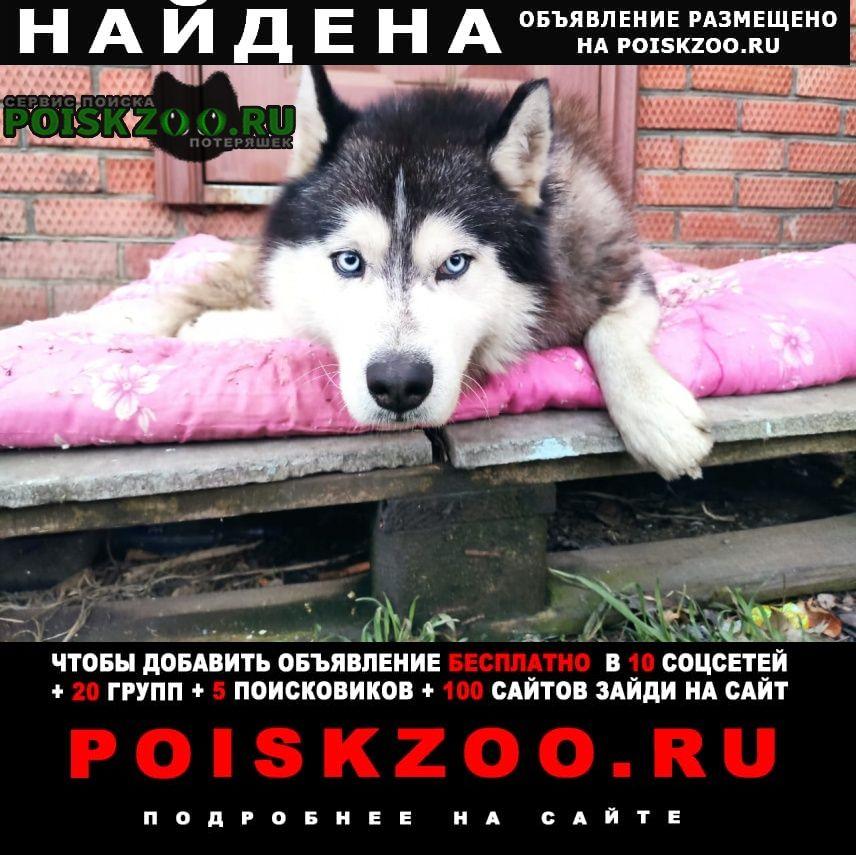 Найдена собака кобель хаски п агроном Динская