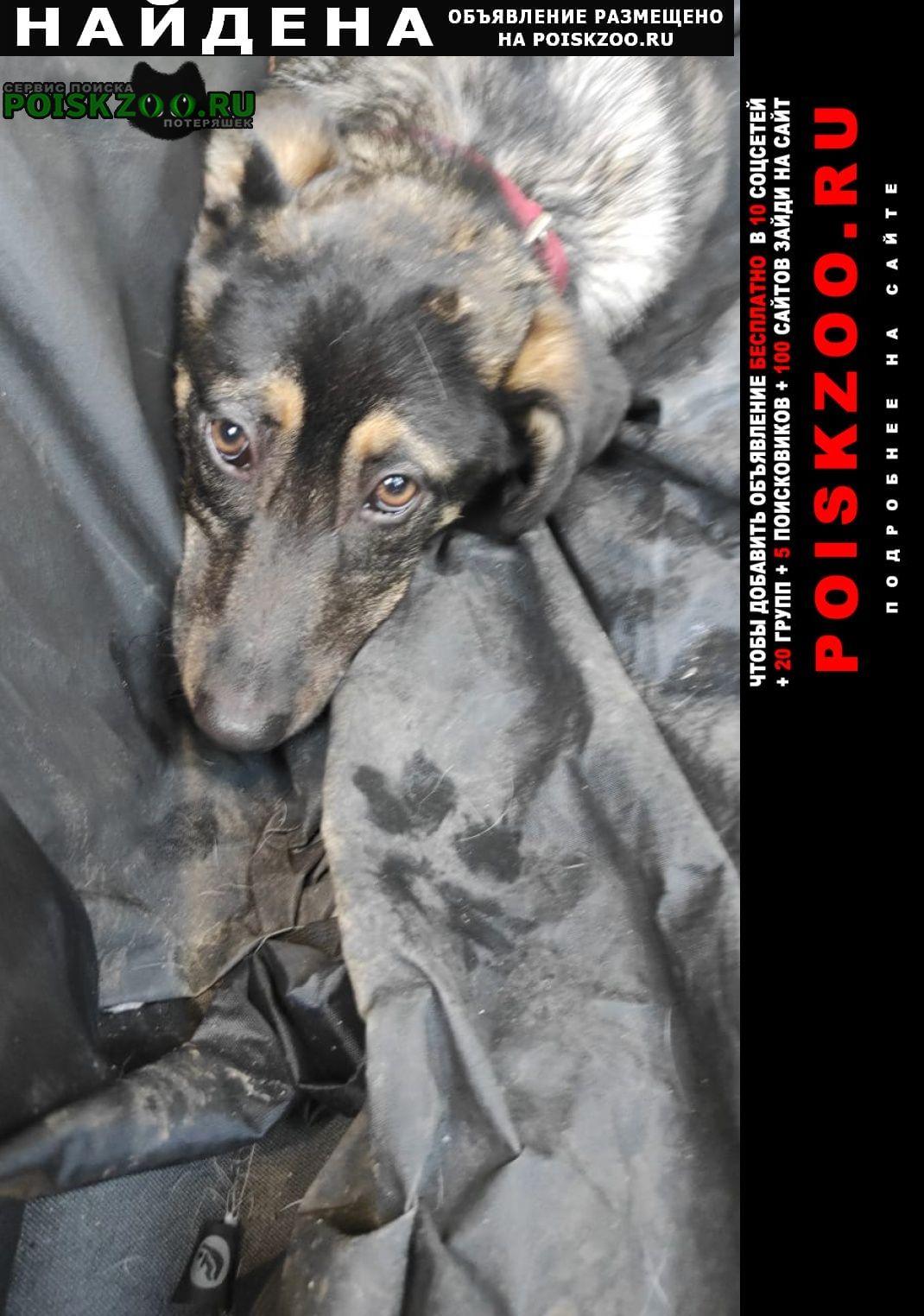 Найдена собака щенок в двух ошейниках (красный и зелён) Москва
