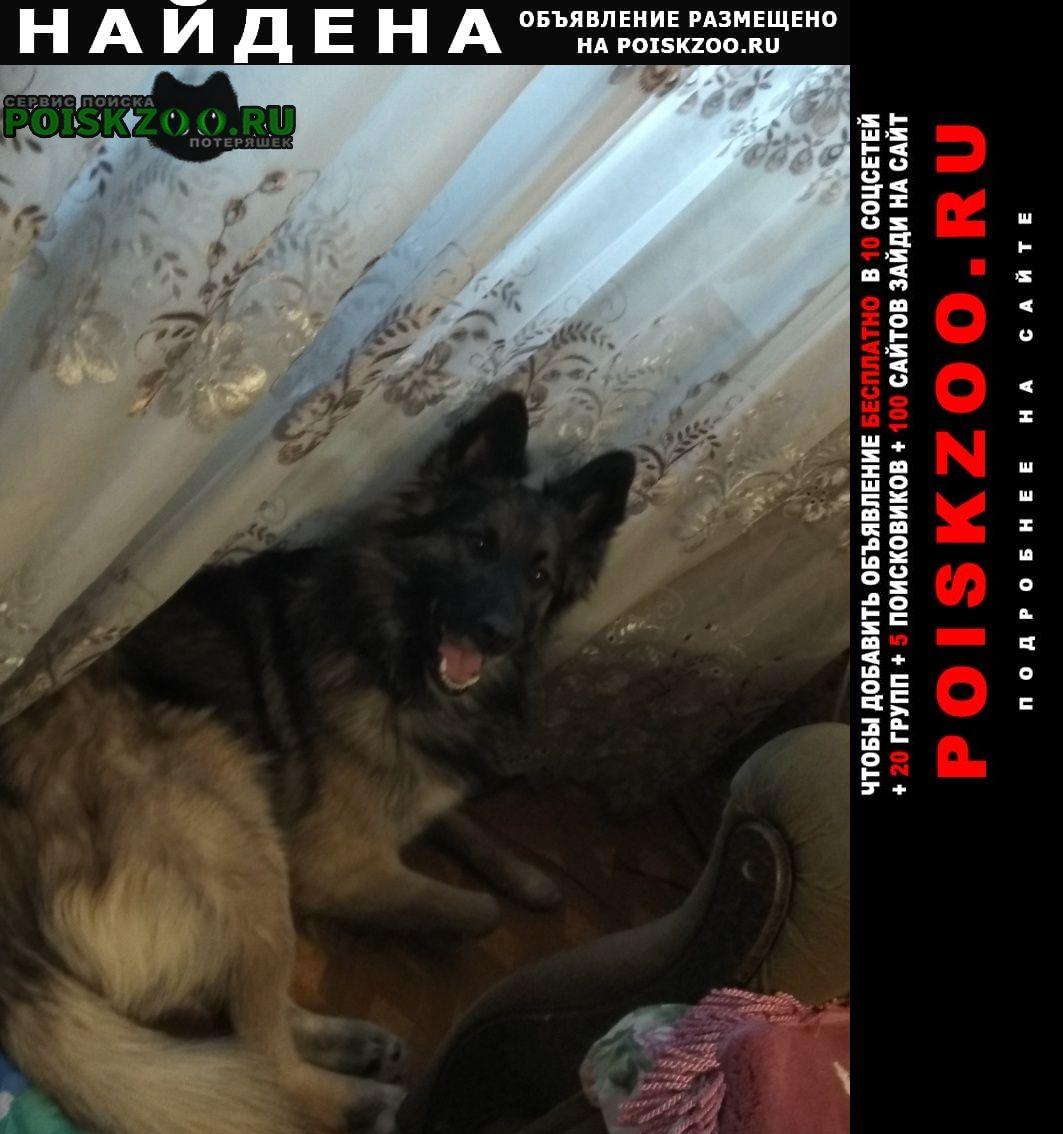 Найдена собака кобель пес 3х годовалый Москва