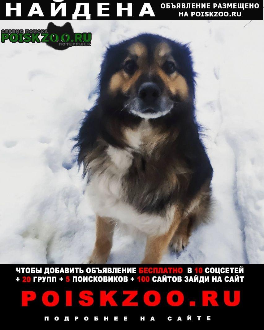 Найдена собака кобель Яхрома