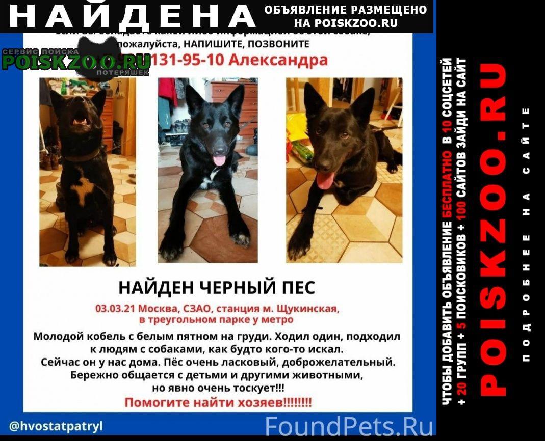 Найдена собака кобель черный самец, с белым пятном на груди Красногорск