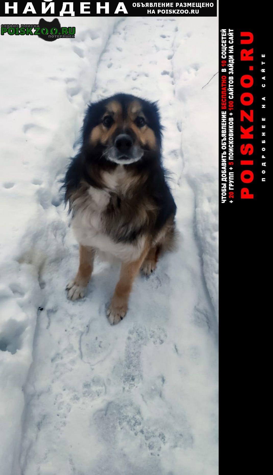 Найдена собака кобель метис Дмитров
