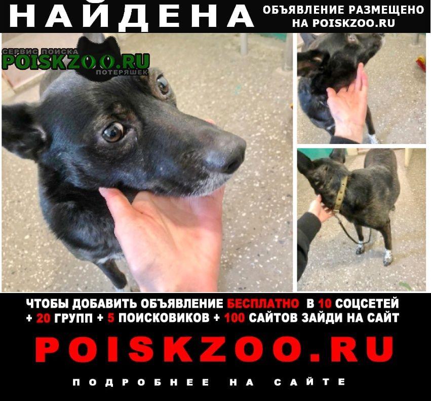 Найдена собака кобель ищу дом Новосибирск